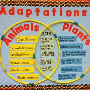 Use A Venn Diagram To Demonstrate Animal And Plant Adaptations