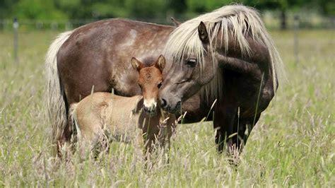 horse  foal grass wallpaper hd
