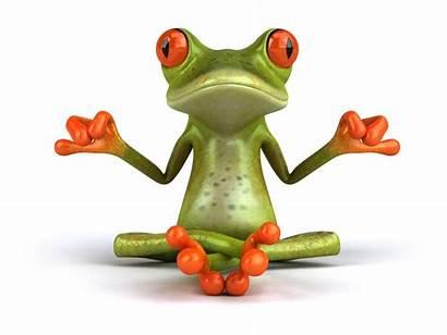 Frog Cartoon Frogs Funny Wallpapers Fun Zen