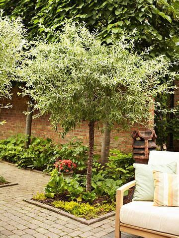small ornamental trees best 25 backyard trees ideas on pinterest landscaping trees fence trees and backyard
