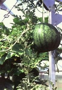 Gemüse Im Gewächshaus : gew chshaus f r gem seanbau tomaten gurken paprika ~ Articles-book.com Haus und Dekorationen