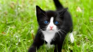 black cats with blue free best pics
