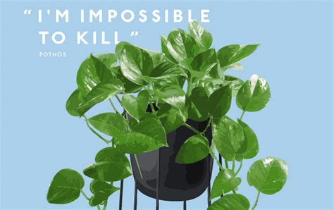 A Guide To Indoor Plants For Serial Plant Killers Gold