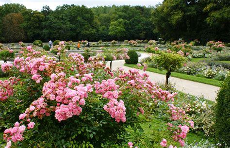 Formal Rose Garden (rosa 'the Fairy') (5)  Karl Gercens