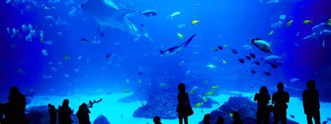 visite de l aquarium de montpellier mare nostrum ila