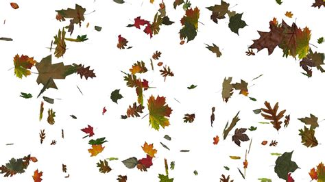3d Falling Leaves Animated Wallpaper - animated falling leaves on white background with real