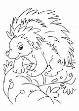Animals Nocturnal Coloring Porcupine Printable Preschool Colouring Animal Mask Sheets Toddlers Craft Junction Mom sketch template
