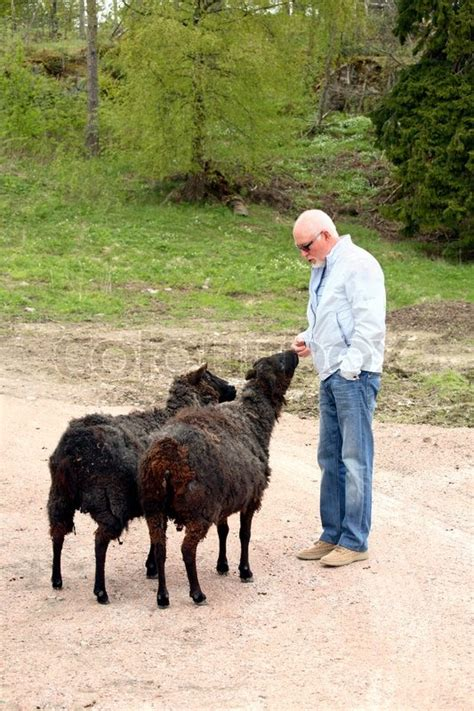 black sheep cuddling  senior man stock photo