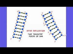 3 4 3 State That Dna Replication Is Semi