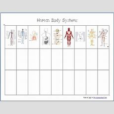Human Body Systems  Worksheets  Homeschool Den
