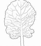 Lettuce Coloring Printable Pages Getcolorings Pag Getdrawings sketch template