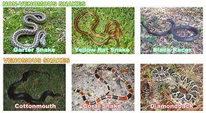 How To Identify Dangerous Snakes from Safe Ones - Is the ...