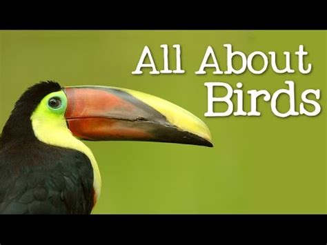 all about birds for children animal learning for kids