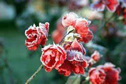 Gartenarbeit Im Februar : gartenarbeiten im februar teil 1 ~ Frokenaadalensverden.com Haus und Dekorationen