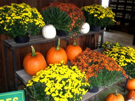 Pumpkin Picking Harford County Maryland by Pumpkin Patch In Baltimore County Maryland Todayrainyp
