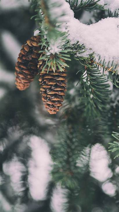 Winter Wonderland Iphone Wallpapers Xs Backgrounds Phone
