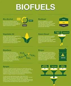 Bio Fuels   Visual.ly