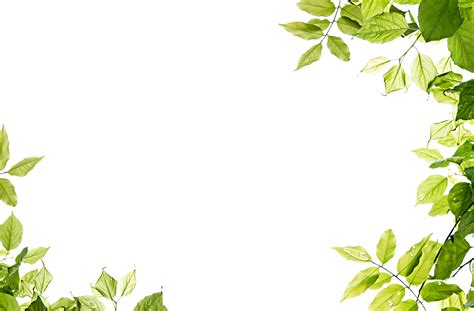 framing leaves green leaves png images free download pictures