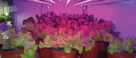 growing vegetables indoors with led lights taking it indoors