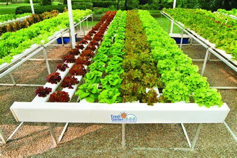 การปลูกพืชไร้ดินสามารถควบคุมการเจริญเติบโตได้หรือไม่