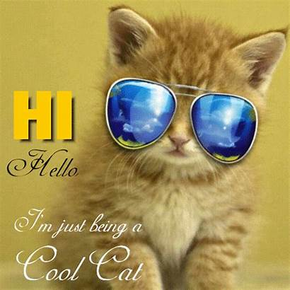 Hello Cool Cat Hi Greetings Cards