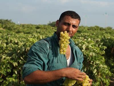 siege a rebond gaza farmers rebound despite siege
