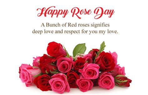feb happy rose day images  hindi english gulab