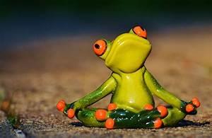 Frosch Bilder Lustig : yoga frosch entspannt kostenloses foto auf pixabay ~ Whattoseeinmadrid.com Haus und Dekorationen