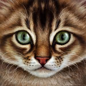 brown tabby cat warrior cats brown tabby by wynnyelle on deviantart