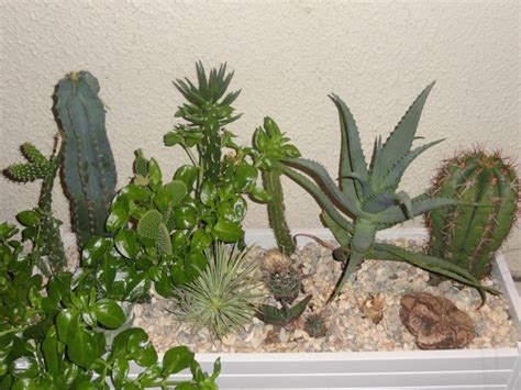 planter un cactus en pleine terre