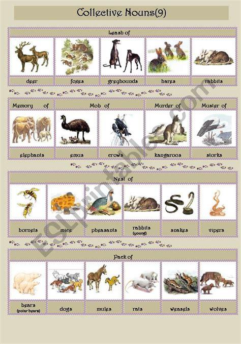 collective nouns animals 9 esl worksheet by smiya