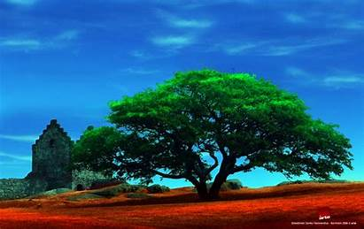 Tree Trees Wallpapers Shady Earth Background Desktop