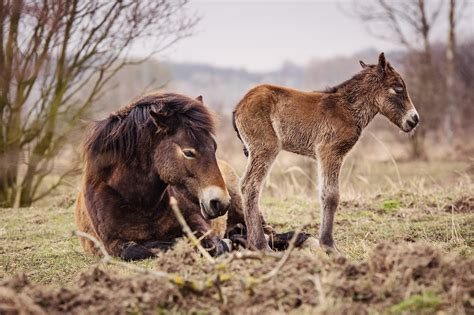 wild horse born ungulate foal today reserve horses