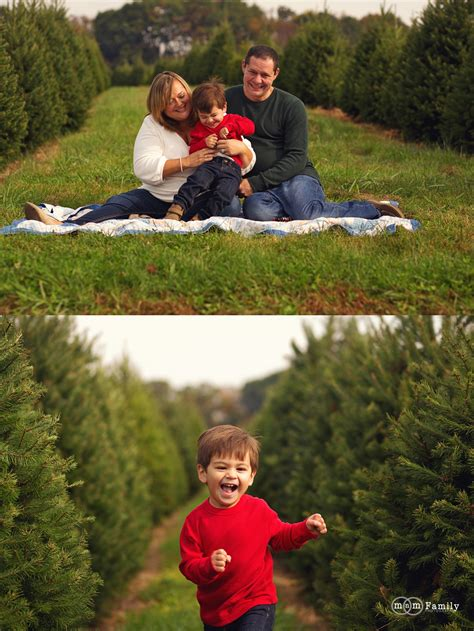 chester county pa christmas tree farms top 28 chester county tree farms clark s tree farm and shop