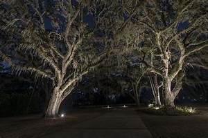 Live oaks for Outdoor lights for oak trees