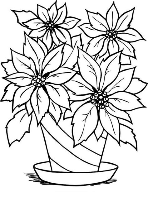 poinsettia flower coloring pages   print