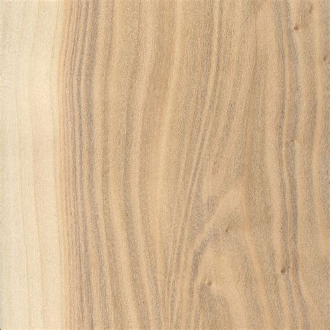 poplar wood white poplar the wood database lumber identification hardwood