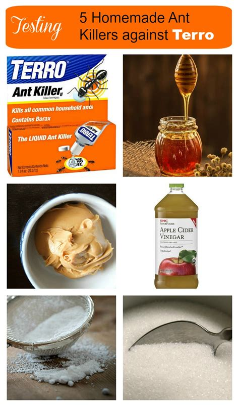 ant killers testing   natural borax ant