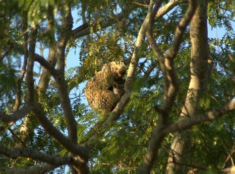 pantanal wildlife holiday trip report royle safaris