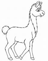 Llama Coloring Clipart Walking Drawing Unicorn Clip sketch template