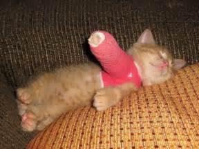 cat broken leg broken leg kitten