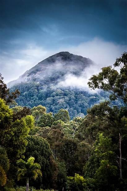Portrait Forest Nature Mountains Landscape Rainforest Tropical