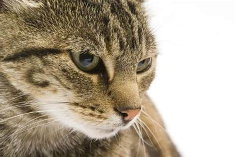 cat food  cat feces smell worse pets