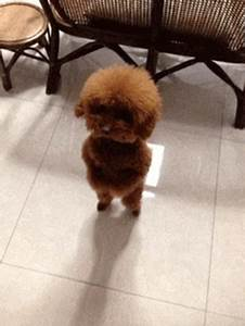 Cute Dog GIF - Find & Share on GIPHY
