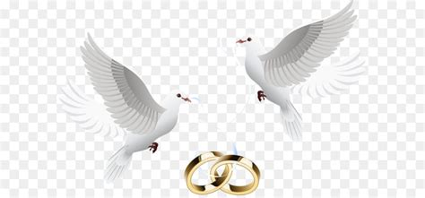 wedding invitation clip art dove inlay ring png download