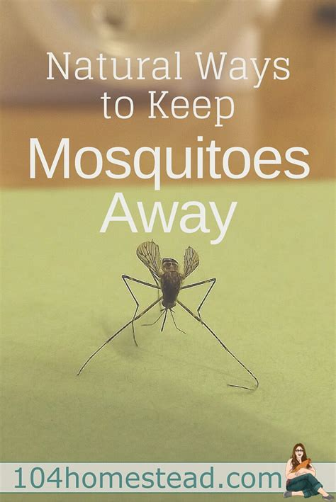 what keeps mosquitoes away ways to keep mosquitoes away naturally