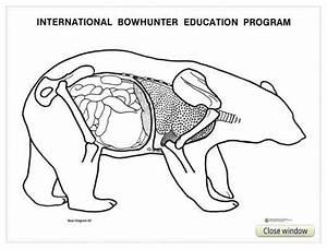 Bear Diagram Charts  U2013 Nbef