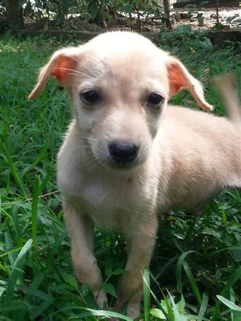 Ee  Find Ee   A Loyal Best Friend In Sri Lanka Adopt A  Ee  Dog Ee