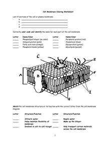 images  cell membrane diagram worksheet cell