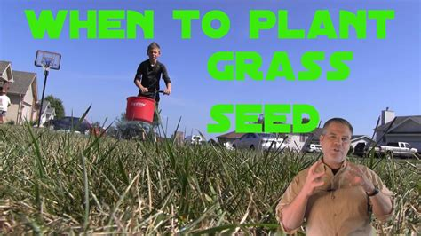 best time to re sod best time to seed the lawn planting grass seed timing youtube